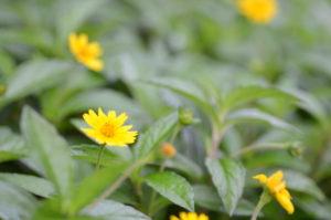 赤田風庭先に咲く花